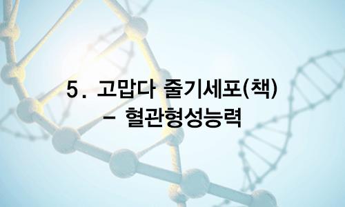 05. 고맙다 줄기세포(책) – 혈관형성능력