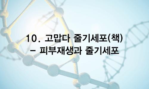10. 고맙다 줄기세포(책) – 피부재생과 줄기세포